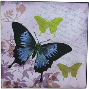 obraz 38x38 - Motýl, 355117